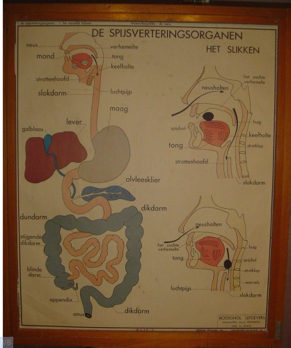 2 - de spijsverteringsorganen